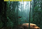 Jungle Crash: The missing Plane - Brain Quest - Αθήνα